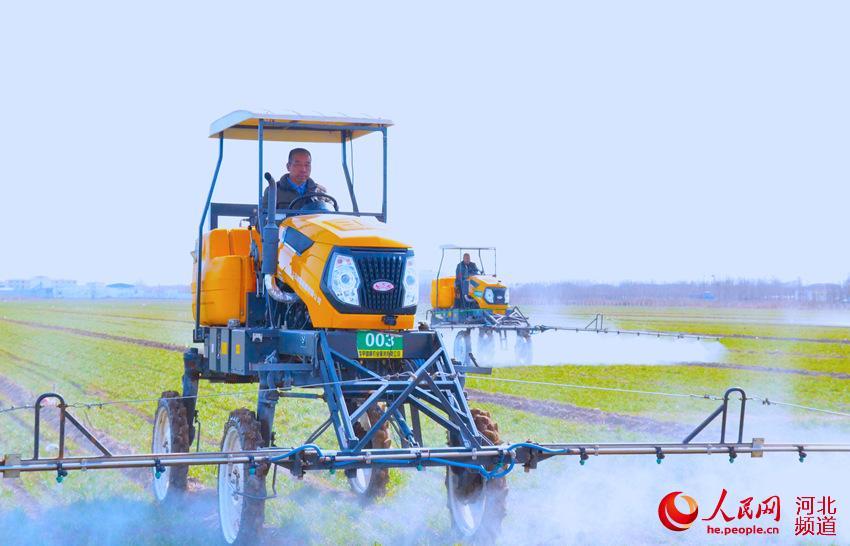 藁城藁优麦:地理标志产品助推农民增收致富